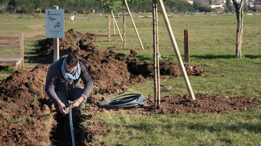 Irrigation is essential for newly planted trees, at least during the first two years,  to allow the rooting system to develop