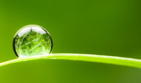 Le Forum de l'Association Européenne d'Irrigation (EIA) se tiendra en ligne le 8 octobre entre 14h00 et 16h00.